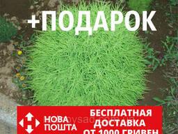 Кохия семена (50 шт) летний кипарис, бассия веничная. ..