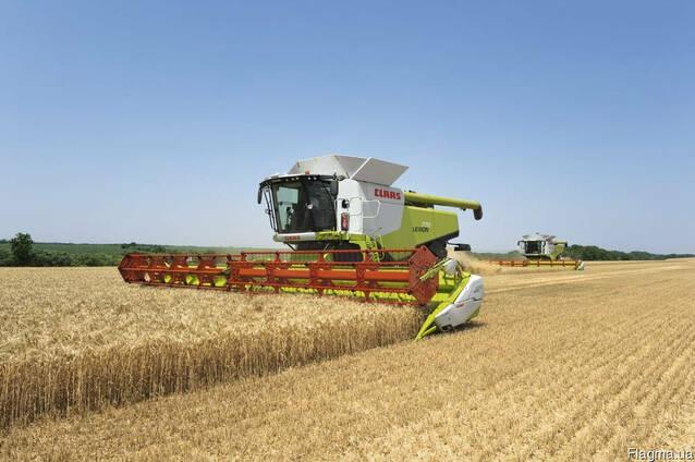 Комбайн аренда услуг в уборке урожая зерновых и масличных.