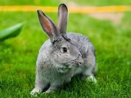 Комбикорм для кролей ( с травяной мукой)