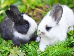 Комбикорм для кроликов откорм