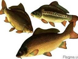 Комбикорм и премикс для Рыбы