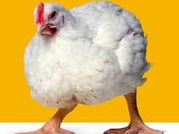Комбикорм/корм для птицы . Комбікорм для бройлерів