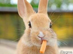 Комбикорм, корма для кроликов в Одессе тм МаксимуМ