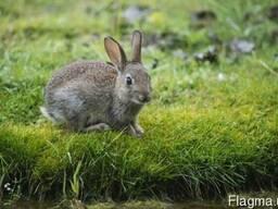 Комбікорма для кролів