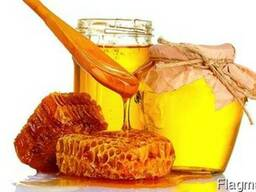 """Компанія """"ГОЛД ХАНІ"""" закуповує мед"""