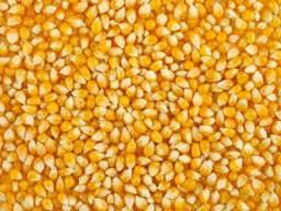 Компанія купить кукурудзу яка не відповідає показникам