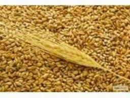 Компания реализует;пшеницу, кукурузу, сою, ячмень
