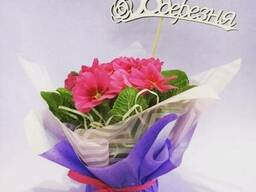 Композиции из живых цветов Купить примула