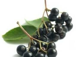 Концентрат ягод бузины пищевой порошкообразный