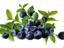 Концентрат ягод черники пищевой порошкообразный