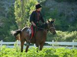 Конные прогулки - фото 1