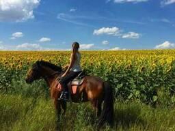 Конные прогулки Харьков, прокат лошадей, конный клуб