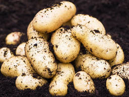 Копачка, картоплекопачка, вібраційна, 1-но рядкова, Bomet