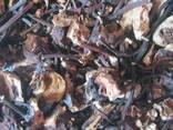 Корень лабазника (гадючник, таволга) вязолистого - фото 1