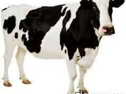 Корма для откорма коров бычков поросят доставка