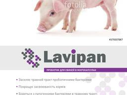 Кормовой пробиотик для животных и птиц Лавипан