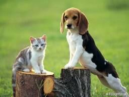 Кошачий древесный наполнитель 10 кг