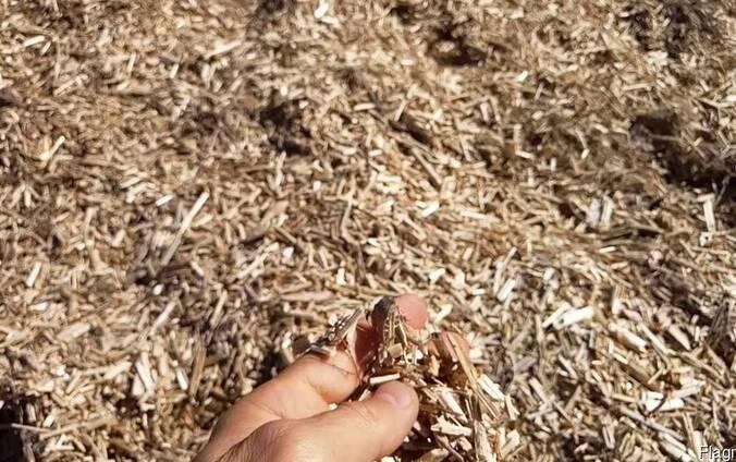 Отходы конопли и льнa производство из марихуаны