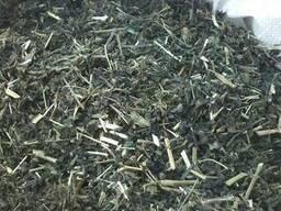Крапива траву