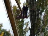 Кронация Спил деревьев. - фото 2