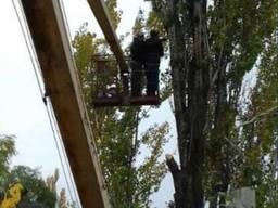 КРОНАЦИЯ Спил Деревьев