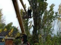 Кронация, Спил деревьев. Запорожье.