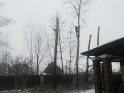 Кронирование деревьев Киев