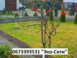 Кронирование деревьев * Схема обрезки деревьев Обрезка и фор