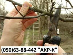 Кронирование плодовых деревьев