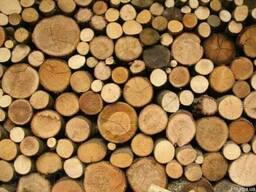 Кругляк древесины различных пород