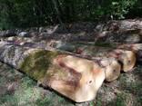 Кругляк дуба великих діаметрів в Черкасах - фото 8