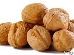 Кругляк грецкого ореха 1000 кг
