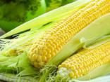Кукуруза - photo 1