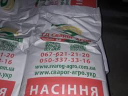 Кукуруза ДБ Хотин (ФАО 280)