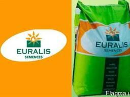 Кукуруза ЕС Бомбастик, ФАО 230, Euralis Semences, семена