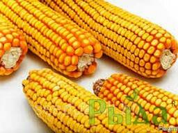 Семена кукурузы Зоряна