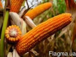 Кукуруза ЕС Палаццо, ФАО 220, Euralis Semences, семена