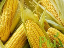 Семена кукурузы Кларити
