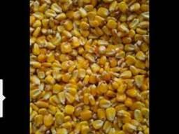Кукуруза, LC