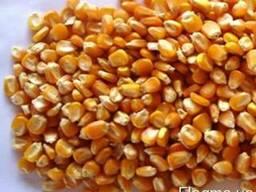 Кукуруза Любава 279МВ