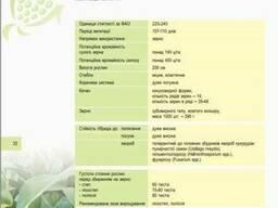 Кукуруза НС 2012 купить, Посевной материал кукурузы цена