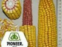 Кукуруза Пионер П9000 / Pioneer P9000