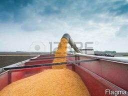Кукуруза пшеница ячмень овес