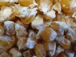 Кукуруза желтая сорт Брусница