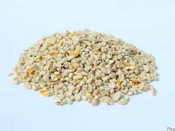 Кукурузный зародыш