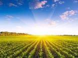 Купим агрофирму в Полтавской, Киевской, Черкасской обл, банк земли от 1000-10000 гектар - фото 4