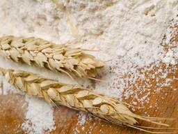 Купим глютен пшеничный