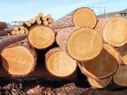 Купим лес (кругляк) мягких пород