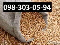 Куплю Пшеницу Ивано-Франковск Украина