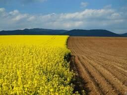 Купим пахотньіе земли от 500 до 5000 га.